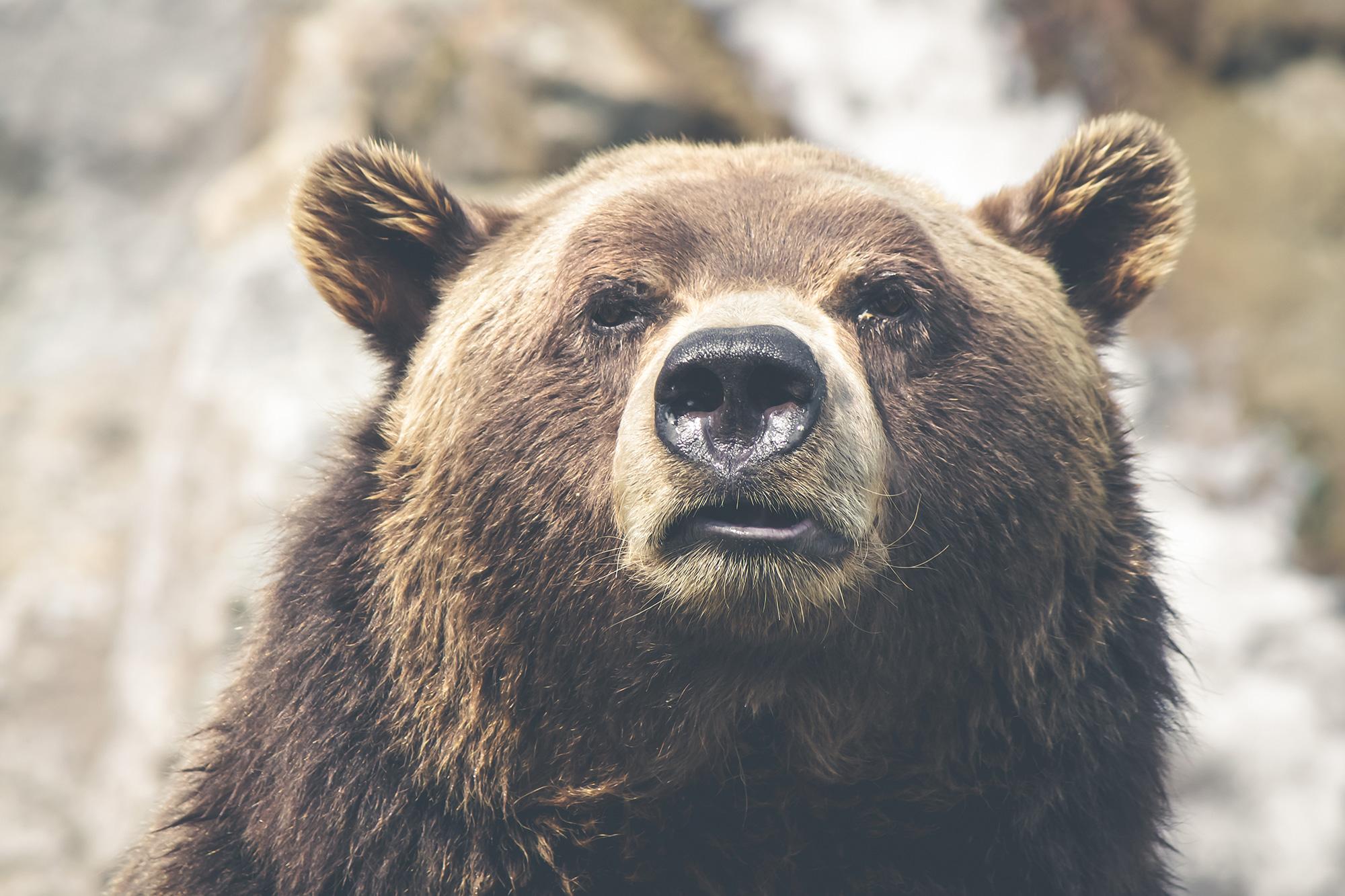 nature-animal-fur-dangerous-2000px